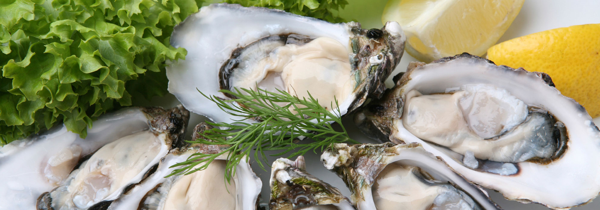 Farmed oysters